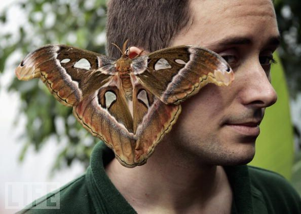 All New Attack Moths The Skeptical Moth